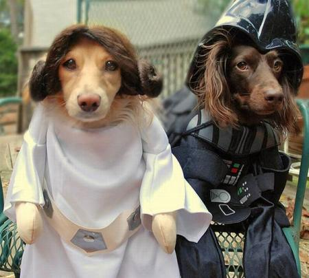 Dogs wearing Star Wars costumes (24 pics)