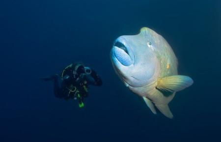 Beautiful things to see underwater (17 pics)