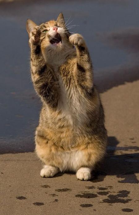 Funny kitty (8 pics)