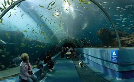 Some huge and beautiful aquariums from different corners of the world (44 pics)