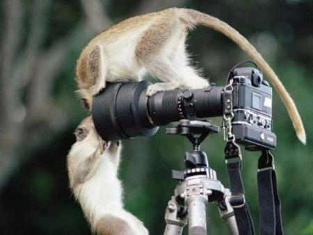 Animal photographers and models (36 pics)