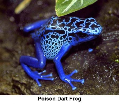 10 most poisonous animals in the world (10 pics)