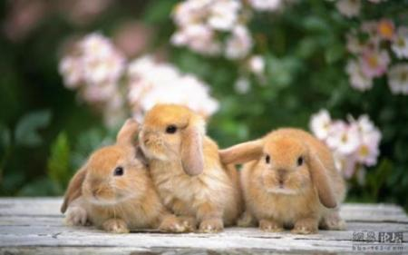 Cute little bunnies (21 pics)