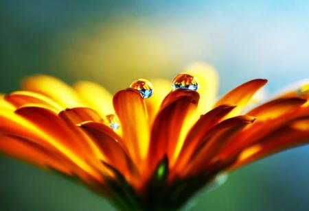 A superb selection of macro shots (14 pics)
