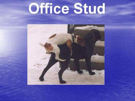 Animals in the office. Very funny. Do you recognize yourself? )) (19 pics)
