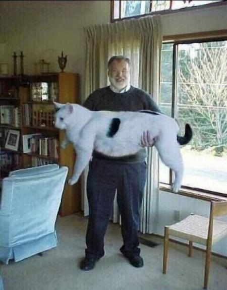 Ridiculously oversized animals! (35 pics)