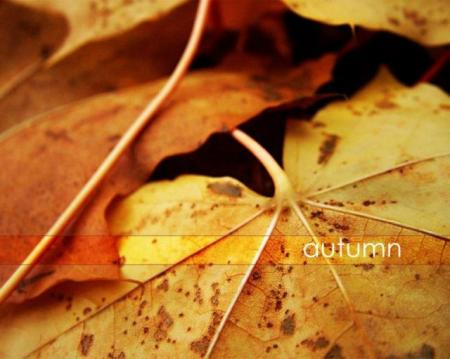 Beautiful autumn (21 pics)