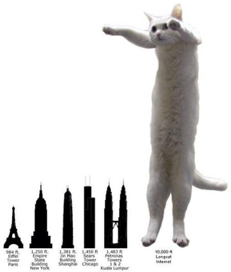 Loooooooongcat!!! (40 pics)