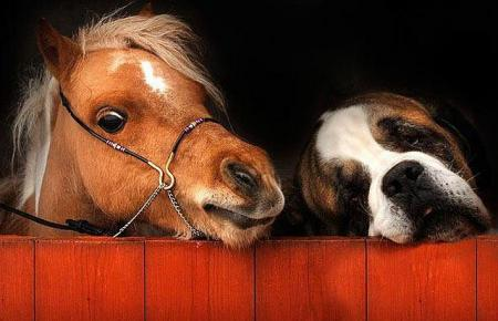 The most unusual friends (27 pics)